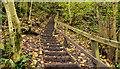 J3670 : Steps, Cregagh Glen, Belfast by Albert Bridge