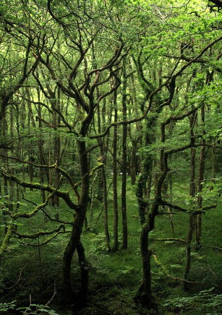 Holne Wood