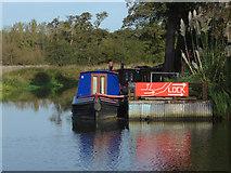 TQ0357 : River Wey by Alan Hunt