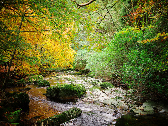 The Shimna River, Tollymore Forest Park