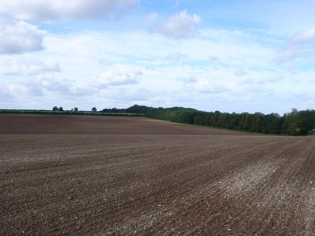 Field near Shernborne