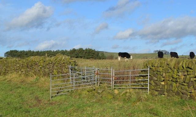 Pastures above Bridge End Farm