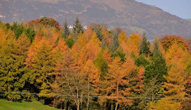 Autumn trees, Barnett Demesne, Belfast (1)