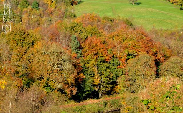 Autumn trees, Barnett Demesne, Belfast (2)