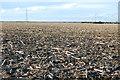 TR0427 : Harvested Crop field on Romney Marsh by Julian P Guffogg