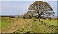J3267 : Tree, the Giant's Ring, Belfast (2) by Albert Bridge