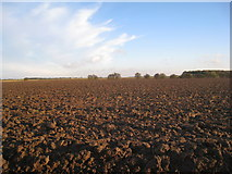 TF3999 : Ploughed field by Jonathan Thacker