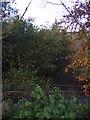 NY6665 : Path and woodland off the A69 near Greenhead by JThomas