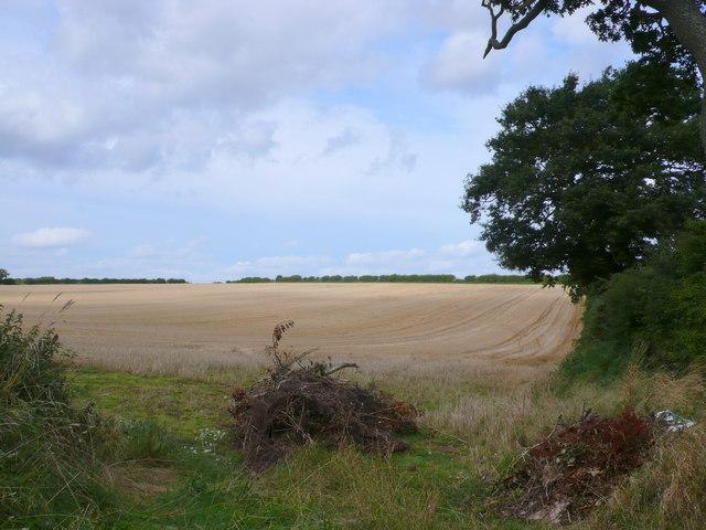 Fields near Fring