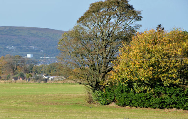 Field and trees, the Giant's Ring, Belfast