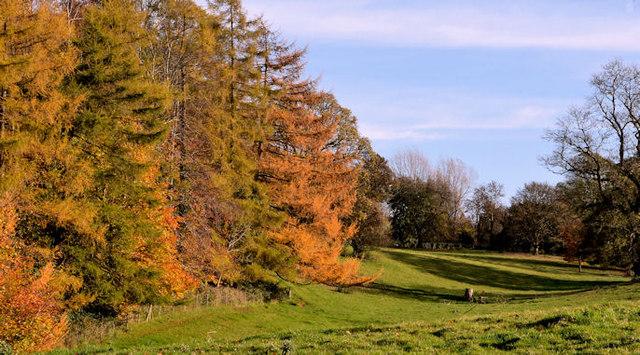 Autumn trees, Ballynahatty, Belfast