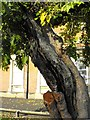 SP0494 : The Mulberry tree, Red House, Great Barr by Penny Mayes