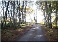 NJ6404 : Dogleg in minor road by Stanley Howe