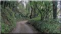 SW7725 : Unnamed lane along the north shore of Gillan Creek by Stuart Logan