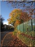 SX9065 : Autumn leaves on Cricketfield Road, Torquay by Derek Harper