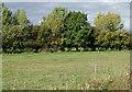 SJ6152 : Farmland south of Burland, Cheshire by Roger  Kidd