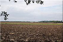 TQ9293 : Ploughed field, Paglesham by N Chadwick