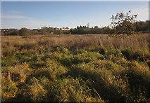 SX9066 : Former landfill site, Barton by Derek Harper