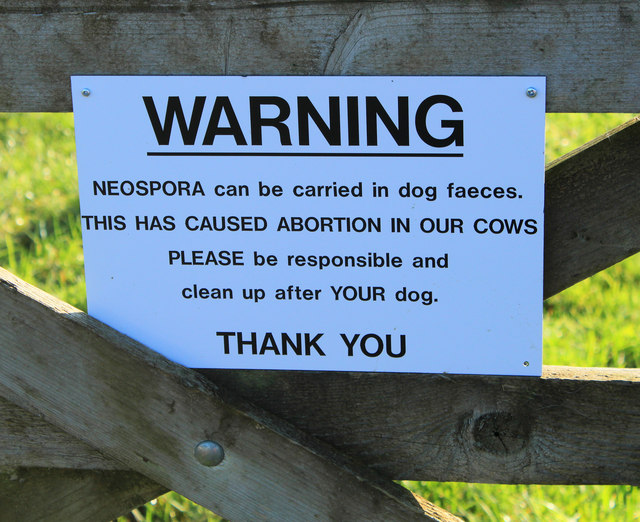 2012 : A dangerous parasite carried by dogs