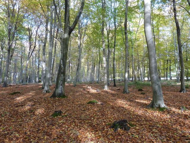 Autumn sunlight in Wildhams Wood
