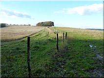 SU8213 : Bridleway to the top of Chilgrove Hill by Dave Spicer