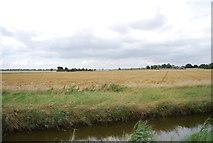 TQ9293 : Farmland by Paglesham Creek by N Chadwick