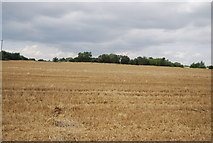 TQ9293 : Farmland, Paglesham Creek by N Chadwick