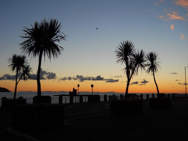 Palm trees ( Cordyline Australis) on Douglas seafront
