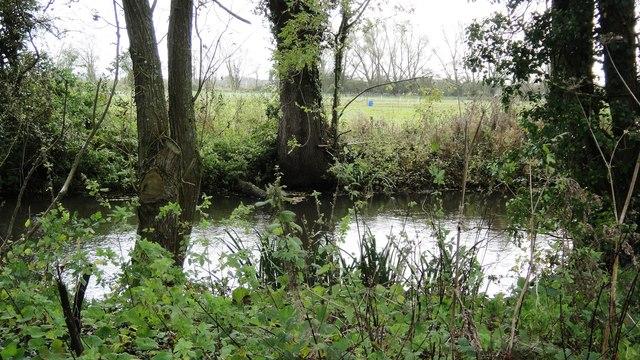 Pond in Shripney Lane