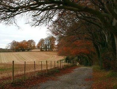 SU4956 : Wayfarer's Walk in autumn by David Lally