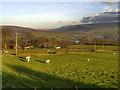 SJ9997 : Landslow Green by David Dixon