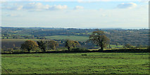ST7037 : 2012 : South from the A359 near Copplesbury Farm by Maurice Pullin