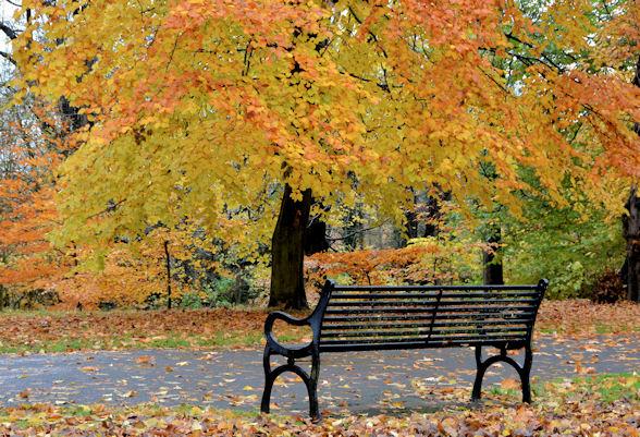 Seat, Ormeau Park, Belfast (2)