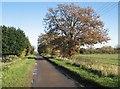 TL4668 : Autumn on Long Drove by John Sutton