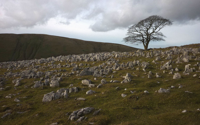 The big tree, Fell End Clouds