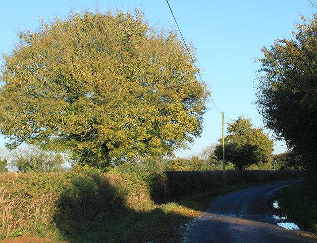 2012 : Lane heading east near Higher Green's Combe Farm