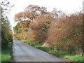 TL3084 : Autumn colours on Hollow Lane near Ramsey by Richard Humphrey