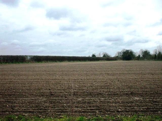 Lodge Farm field