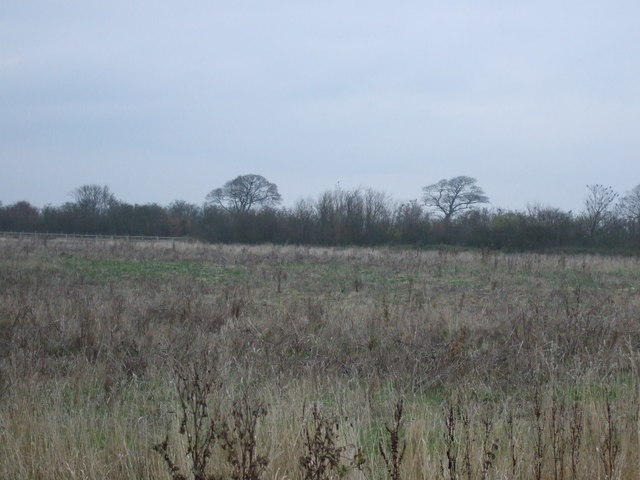 Rough grazing off Jewison Lane