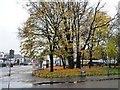 NS6564 : A splash of autumn colour, Shettleston by Christine Johnstone