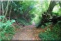TQ6864 : Footpath up the North Downs Scarp Slope, Scrub Wood by N Chadwick