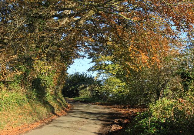 2012 : Norton Lane in autumn