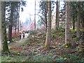 NX8499 : Drumlanrig Woods by Richard Webb