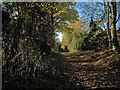 TL4944 : Path to Ickleton Windmill by John Sutton