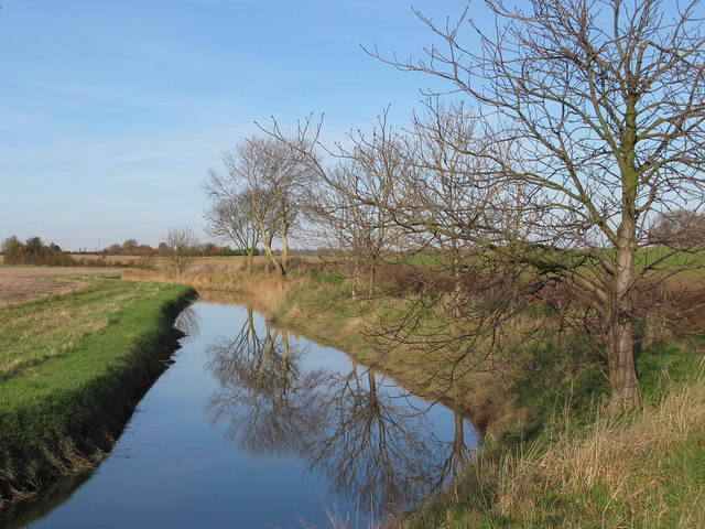 Trees reflected in ditch