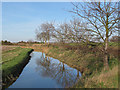 TQ9293 : Trees reflected in ditch by Roger Jones