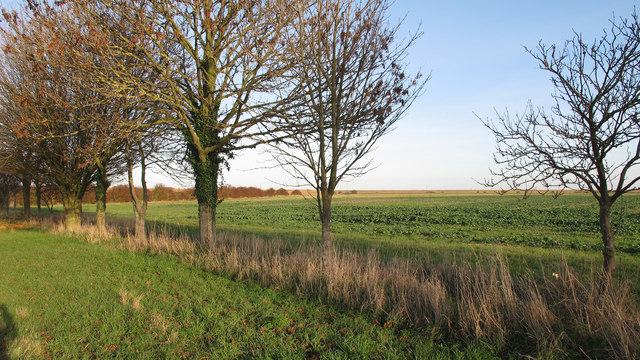 Trees line track