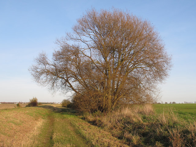 Willow tree behind the embankment