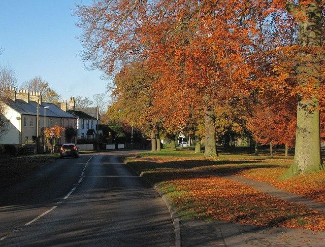 Whittlesford: autumn leaves