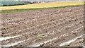 J4670 : Ploughed field, Comber by Albert Bridge
